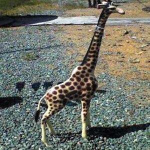 Med Giraffe Garden Statue A3653 1