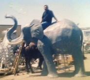 Elephant, lifesize