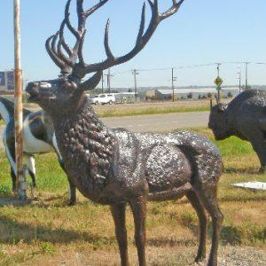 Elk Standing