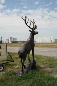 Elk head right