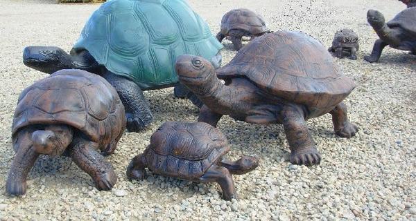 tortoise-herd